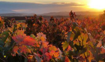 Escapada a La Rioja